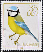 GERMANY- CIRCA 1979: stamp printed in Germany, shows Song Birds, bluetit, circa 1979. — Zdjęcie stockowe