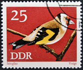 GERMANY - CIRCA 1973: A stamp printed in Germany dedicated to birds, shows goldfinch (carduelis carduelis), circa 1973 — Stock Photo