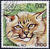 LAOS - CIRCA 1981: A stamp printed in Laos shows a Felis silvestris ornata, circa 1981 — Stock Photo