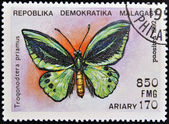 MADAGASCAR - CIRCA 1992: A stamp printed in Madagascas dedicated to butterfly shows troqonodtera priamus, circa 1992 — Stock Photo
