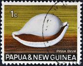 PAPUA NEW GUINEA - CIRCA 1969: A stamp printed in Papua New Guinea shows shell ovula ovum, circa 1969 — Stock Photo