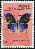 PAPUA NEW GUINEA - CIRCA 1995: A stamp printed in Papua New Guinea shows terinos alurgis, butterfly, circa 1995 — Stock Photo