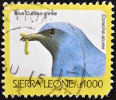 SIERRA LEONE - CIRCA 2002: A stamp printed in sierra Leone shows blue cuckoo-shrike, coracina azurea, circa 2002 — Foto de Stock