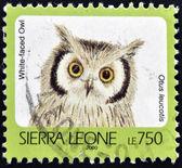 SIERRA LEONE - CIRCA 2000: A stamp printed in sierra Leone shows White-faced owl, otus leucotis, circa 2000 — Stock Photo