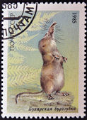 UNION OF SOVIET SOCIALIST REPUBLICS - CIRCA 1985: a stamp printed in USSR shows a Pamir shrew (Sorex bucharensis), from the endangered wildlife series, circa 1985 — Stock Photo