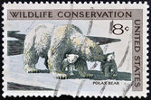 UNITED STATES OF AMERICA - CIRCA 1971: A stamp printed in USA dedicated to wildlife conservation, shows polar bear, circa 1971 — Stock Photo