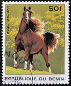BENIN - CIRCA 1996: A stamp printed in Benin showing brown horse, circa 1996 — Stock Photo
