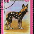 AFGANISTAN - CIRCA 1984: A stamp printed in AFGANISTAN shows image of a wild dog (Lycaon pictus), circa 1984 - Stock Photo