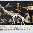 GERMANY - CIRCA 2010: A stamp printed in Germany dedicated to the 200th anniversary of the Museum of Natural History in Berlin, shows a dinosaur skeleton and diferents animals, circa 2010 — Stock Photo