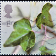 UK - CIRCA 2002: A stamp printed in United Kingdom shows the spring whit a green ivy leaf , circa 2002 — Stock Photo