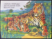 RUSSIA - CIRCA 1992: A stamp printed in Russia shows Family resting tigers, circa 1992 — Stock Photo