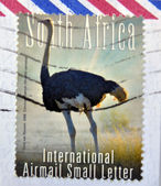 SOUTH AFRICA - CIRCA 2000: A stamp printed in RSA shows an ostrich, circa 2000 — Stock Photo