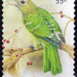 Stock Photo: AUSTRALI- CIRC2009: stamp printed in Australishows Green Catbird, Ailuroedus crassiostis, circ2009