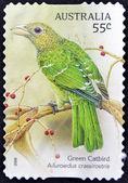 AUSTRALIA - CIRCA 2009: A stamp printed in Australia shows Green Catbird, Ailuroedus crassiostis, circa 2009 — Stock Photo