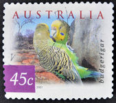 AUSTRALIA - CIRCA 2001: A stamp printed in Australia shows image of a budgerigar (Melopsittacus undulatus), circa 2001 — 图库照片