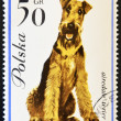 POLAND - CIRCA 1963: stamp printed in Poland shows Airedale terrier dog, circa 1963. — Stock Photo