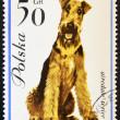 POLAND - CIRCA 1963: stamp printed in Poland shows Airedale terrier dog, circa 1963. — Stock Photo