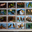 Stock Photo: UMM AL QIWAIN - CIRC1973: Collection stamps printed in Umm al Qiwain shows Parrots, circ1973