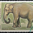 VIETNAM - 1984: A stamp printed in Vietnam displaying an elephant, Circa 1984 — Stock Photo