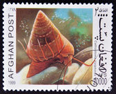 AFGHANISTAN - CIRCA 1999: A stamp printed in Afghanistan shows Calliostoma zizyphinus, circa 1999 — Stock Photo