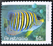 AUSTRALIA - CIRCA 2010: A stamp printed in Australia shows an image of regal angelfish coral faith, inventive, circa 2010 — Stock Photo