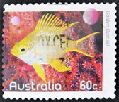AUSTRALIA - CIRCA 2010: A stamp printed in Australia shows an image of regal Golden Damselfish faith, inventive, circa 2010 — Stock Photo