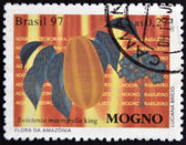 BRAZIL - CIRCA 1997: A stamp printed in Brazil shows Mahogany, Swietenia macrophylla king, circa 1997 — Stock Photo