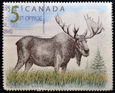 CANADA - CIRCA 1997: A stamp printed in Canada shows a Moose orignal, circa 1997 — Stock Photo