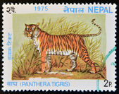 NEPAL - CIRCA 1975: A stamp printed in Nepal shows image a Tiger, Panthera Tigris, circa 1975. — Stock Photo