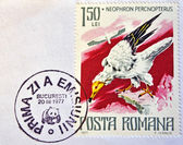 ROMANIA - CIRCA 1977: A stamp printed in Romania shows Egyptian vulture, circa 1977. — Стоковое фото