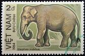 VIETNAM - 1984: A stamp printed in Vietnam displaying an elephant, Circa 1984 — Photo