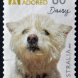 AUSTRALIA - CIRCA 2010: A stamp printed in Australia shows Adopted and adored campaign, Daisy, a dog breed westies, circa 2010 — Stock Photo