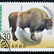 BULGARIA - CIRCA 2000: A stamp printed in Bulgaria shows a Bison Bonasus, circa 2000 — Stock Photo