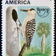 CUBA - CIRCA 1995: A stamp printed in Cuba shows a bird, centurus superciliaris, circa 1975 — Stock Photo #11969623