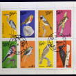 Royalty-Free Stock Photo: STATE OF OMAN - CIRCA 1977: Collection stamps printed in State of Oman shows series devoted to the birds, circa 1977