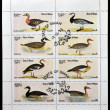 OMAN - CIRCA 1977: A collection stamps printed in Oman showing eight kinds of goose, circa 1977 — Stock Photo
