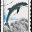 ROMANIA - CIRCA 1996: A stamp printed in Romania shows dolphin, circa 1996. — Stock Photo