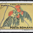 Stock Photo: ROMANI- CIRC1995: stamp printed in Romanishows Albizijulibrissin, circ1995.