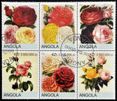 ANGOLA - CIRCA 2000: Collection stamps shows roses, circa 2000 — Stock Photo