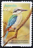 AUSTRALIA - CIRCA 2010: A stamp printed in Australia shows a red backed kingfisher on a branch, circa 2010 — Stock Photo