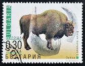 BULGARIA - CIRCA 2000: A stamp printed in Bulgaria shows a Bison Bonasus, circa 2000 — Stock Photo