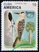 Cuba - circa 1995 : un timbre imprimé en spectacles de cuba, un oiseau, centurus superciliaris, circa 1975 — Photo
