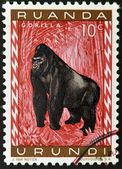 RWANDA - CIRCA 1985: A stamp printed in Rwanda showing gorilla, circa 1985 — Stock Photo
