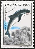 ROMANIA - CIRCA 1996: A stamp printed in Romania shows dolphin, circa 1996. — Stock Photo