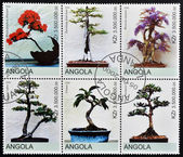 ANGOLA - CIRCA 2000: Collection stamps shows different bonsai, circa 2000 — Stock Photo
