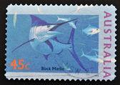 AUSTRALIA - CIRCA 1995: stamp printed in Australia shows Black Marlin, circa 1995 — Stock Photo
