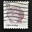 UNITED STATES OF AMERICA - CIRCA 1985: A stamp printed in USA shows the Calico Scallop, circa 1985 — Stock Photo