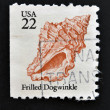UNITED STATES OF AMERICA - CIRCA 1985: A stamp printed in USA shows shell of Frilled Dogwinke, circa 1985 — Stock Photo