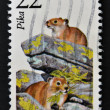 UNITED STATES OF AMERICA - CIRCA 1987: A stamp printed in USA shows Pika, circa 1987 — Stock Photo