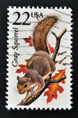 UNITED STATES OF AMERICA - CIRCA 1987: A stamp printed in USA shows a Gray Squirrel, circa 1987 — Stock Photo